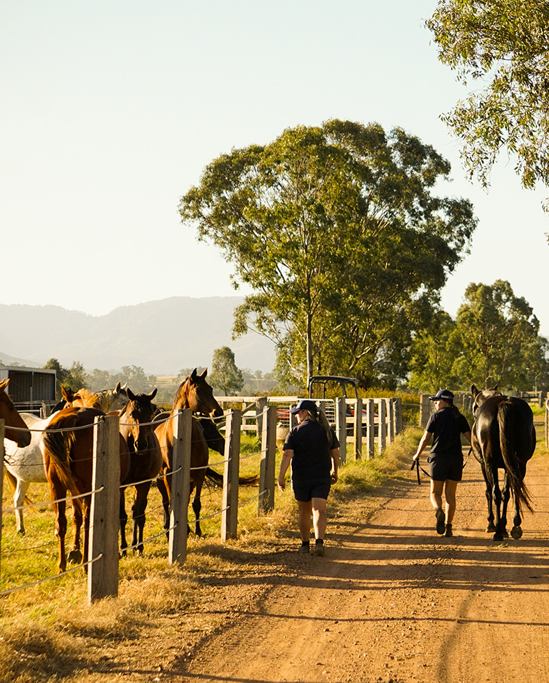 riversdale_home_mares_2